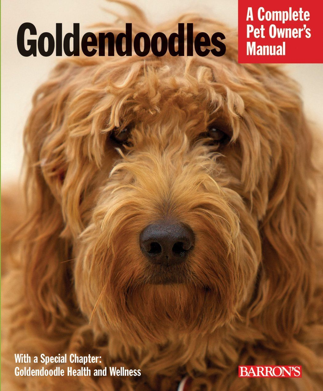 Goldendoodle Puppy Training Information 2021