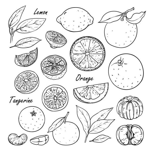 20+ Oranges Clipart Black And White Cute