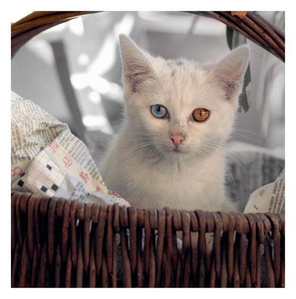 Kitten by floflo.deviantart.com on @deviantART