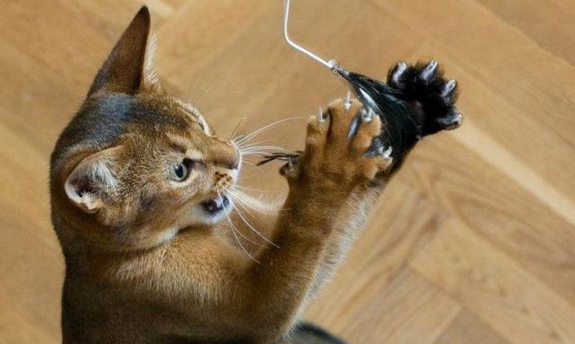 comment faire une maison pour chat en carton - Google Search Cats - comment construire sa maison soi meme