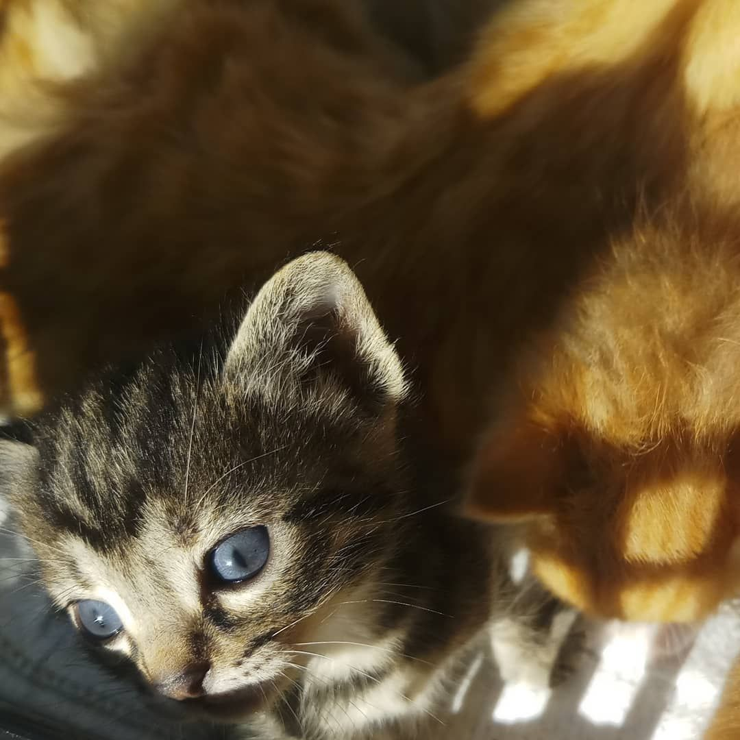 Watch My Kitten Grow Kitten Cute Chat Chaton Cat
