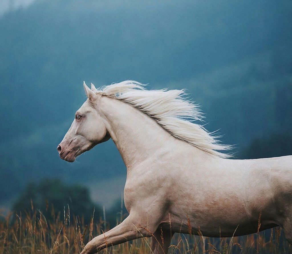 مشـاري On Twitter Beautiful Horses Horse Life Animals Beautiful