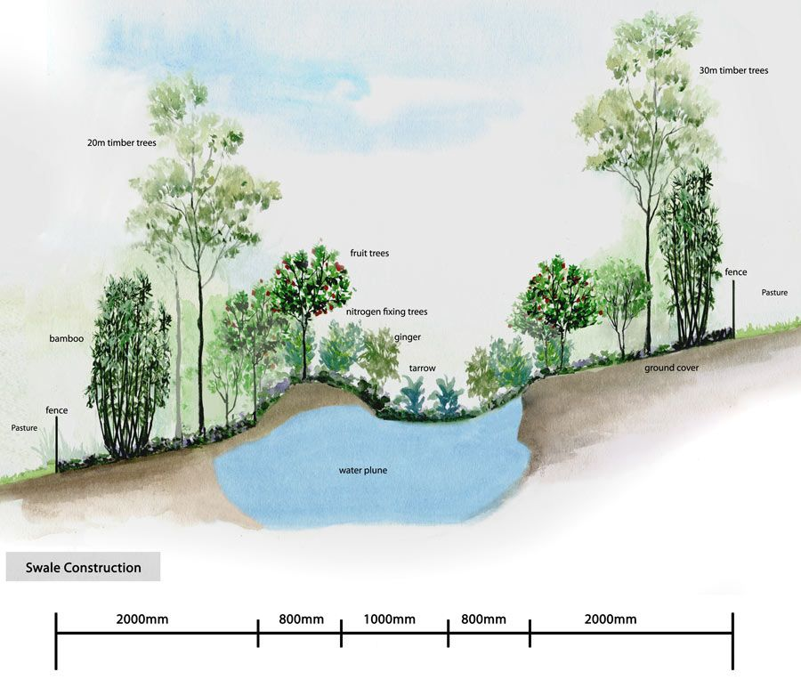 Water Use- Permaculture Swale