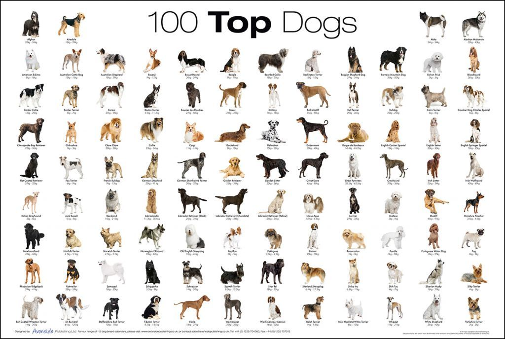 Pictures of all dog breeds in the world