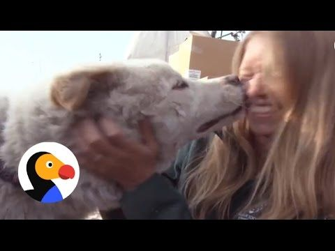 Dogs Saved From Dog Meat Farm In South Korea   The Dodo