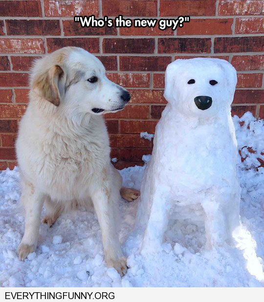 funny dog pictures dog looking strangely suspiciously as snow dog