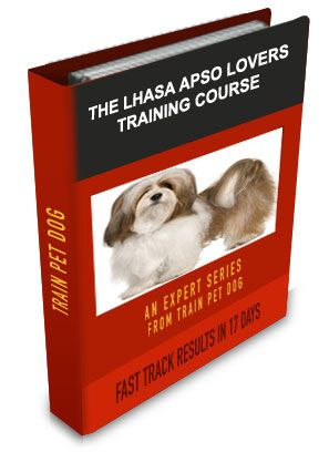 Lhasa Apso Training Learn All About