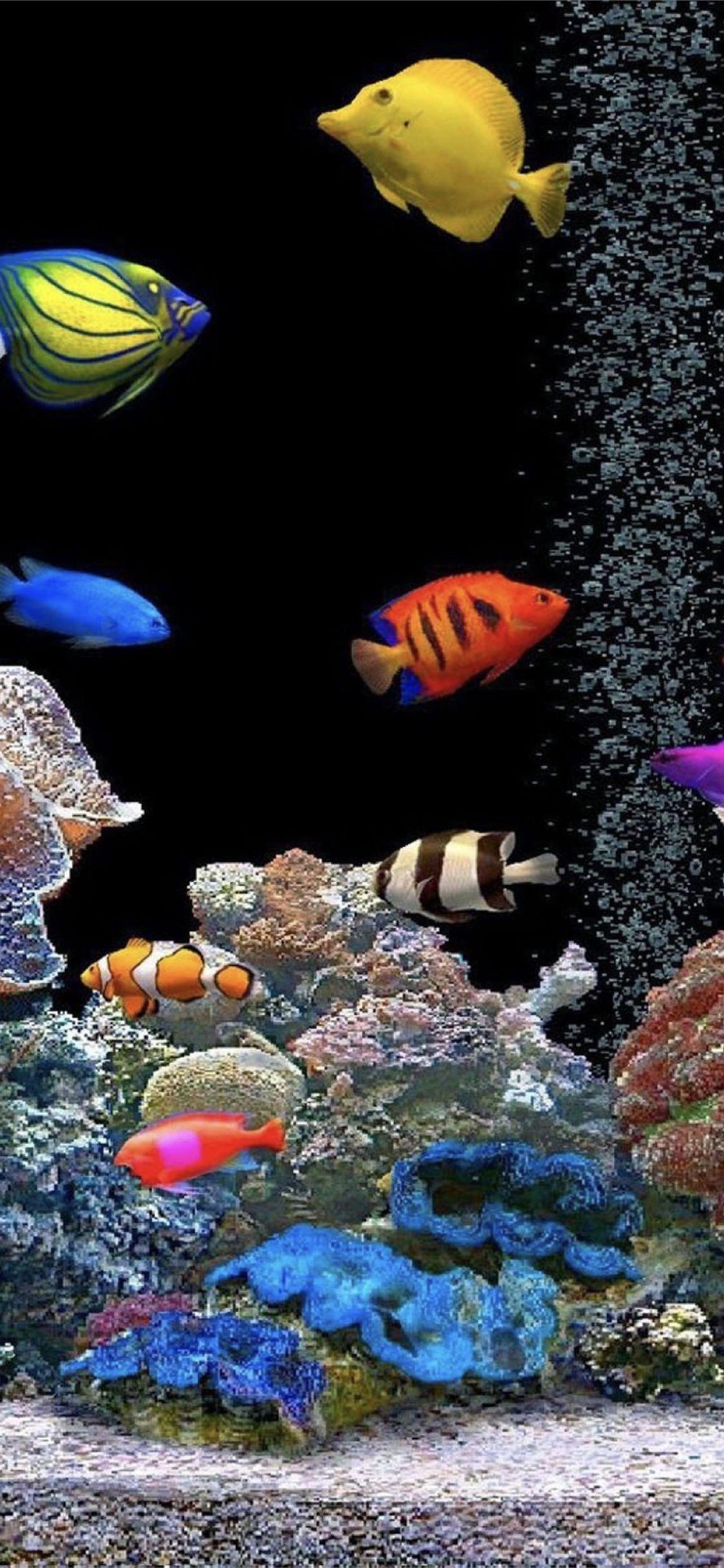 Aquarium Tank Colorful Parallax Trends Iphone11wallpaper In 2020 Tank Wallpaper Live Fish Wallpaper Fish Wallpaper