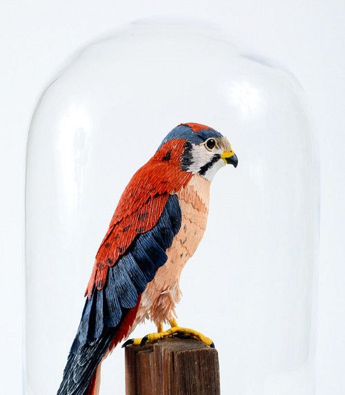 taxidermie rapace