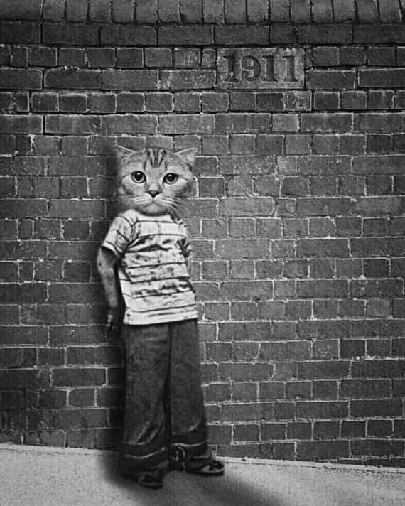 Cat print cat art cat lovers gift weird art black white print photo prints wall art quirky art unusual art anthropomorphic art