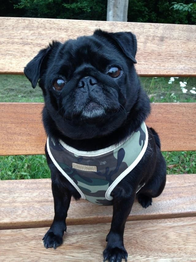 Army camo soft harness comes with FREE matching leash from
