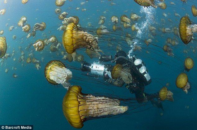 From the movie Oceans    via http://disney.go.com/disneynature/oceans/