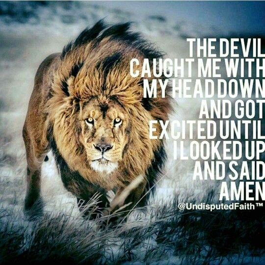 70 Best Images About Walk Your Family Through The Bible On: The Lion Of The Tribe Of Judah!!