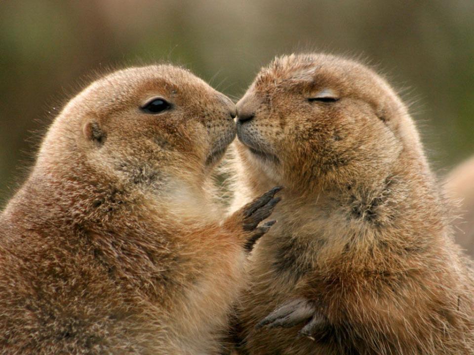 Животные поцелуй картинки