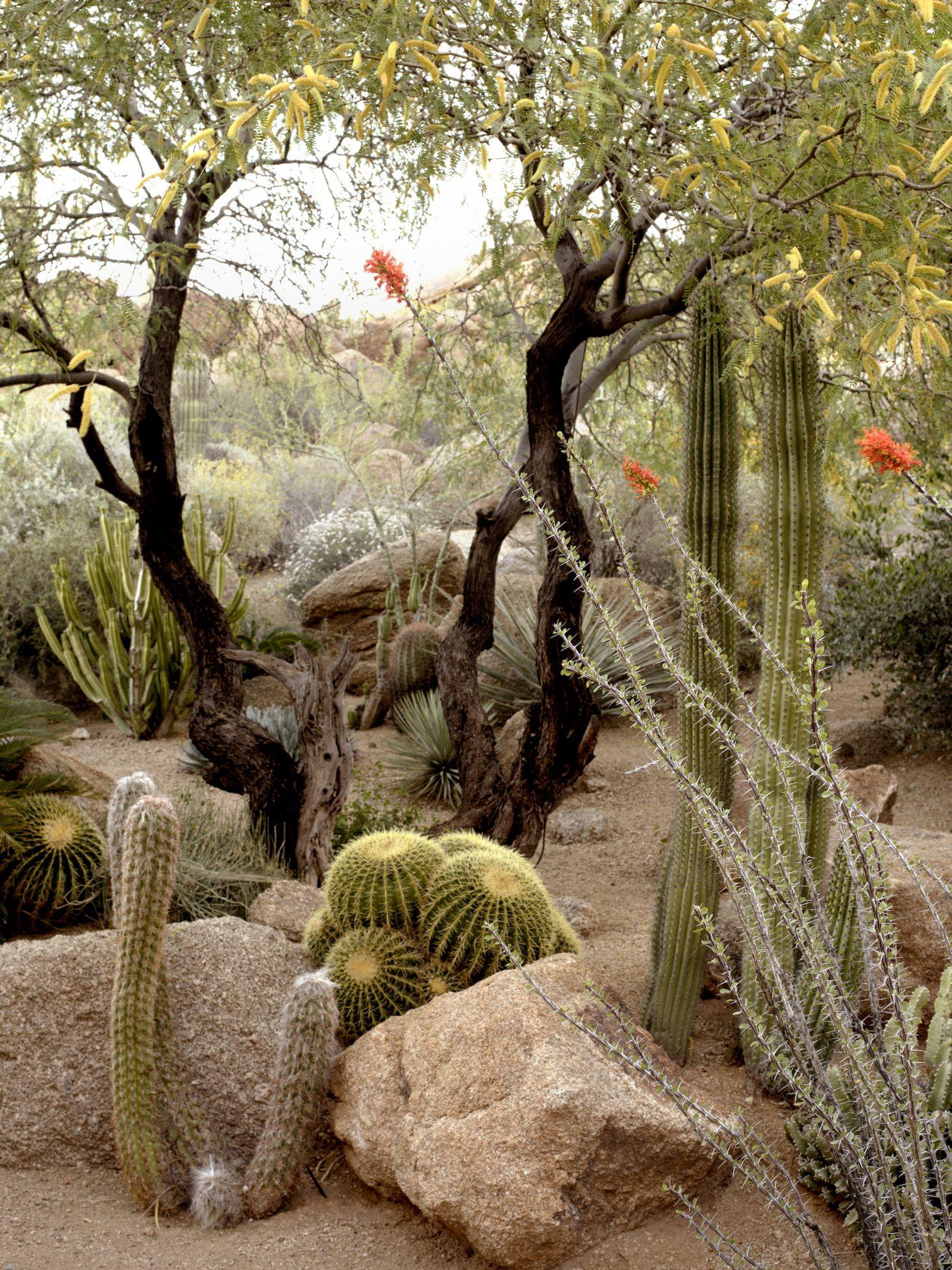 10 Ideas To Steal From Desert Gardens Landscape Design