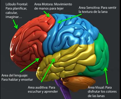 11 Ideas De Maqueta Del Cerebro Maqueta Del Cerebro Cerebro Maquetas Cerebro