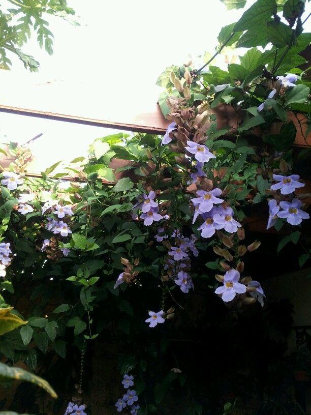 Flores de mi jardin !!!