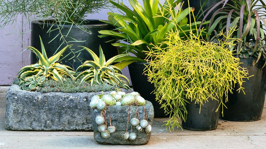 38 Ideas for Succulents in Containers Container design, Plants and
