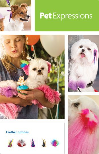 Pinned From Petsmart Com Feathering Options Now Offered Dog Dye Dog Grooming Creative Grooming