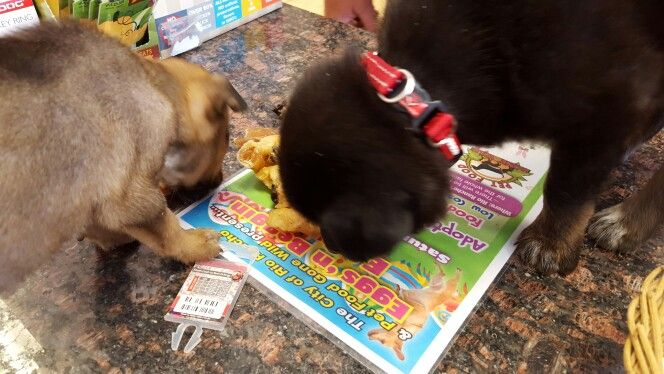 Puppy Madnesspfgw Pet Food Gone Wild Pinterest Pet Food