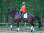 Would you like to learn all levels of dressage? This black 2002 Oldenburg gelding by Relevant can take you there! Lovely partner to teach you the FEI movement and get you comfortable in the ring. Has competed at all levels including 2 green Grand Prixs. $128,000