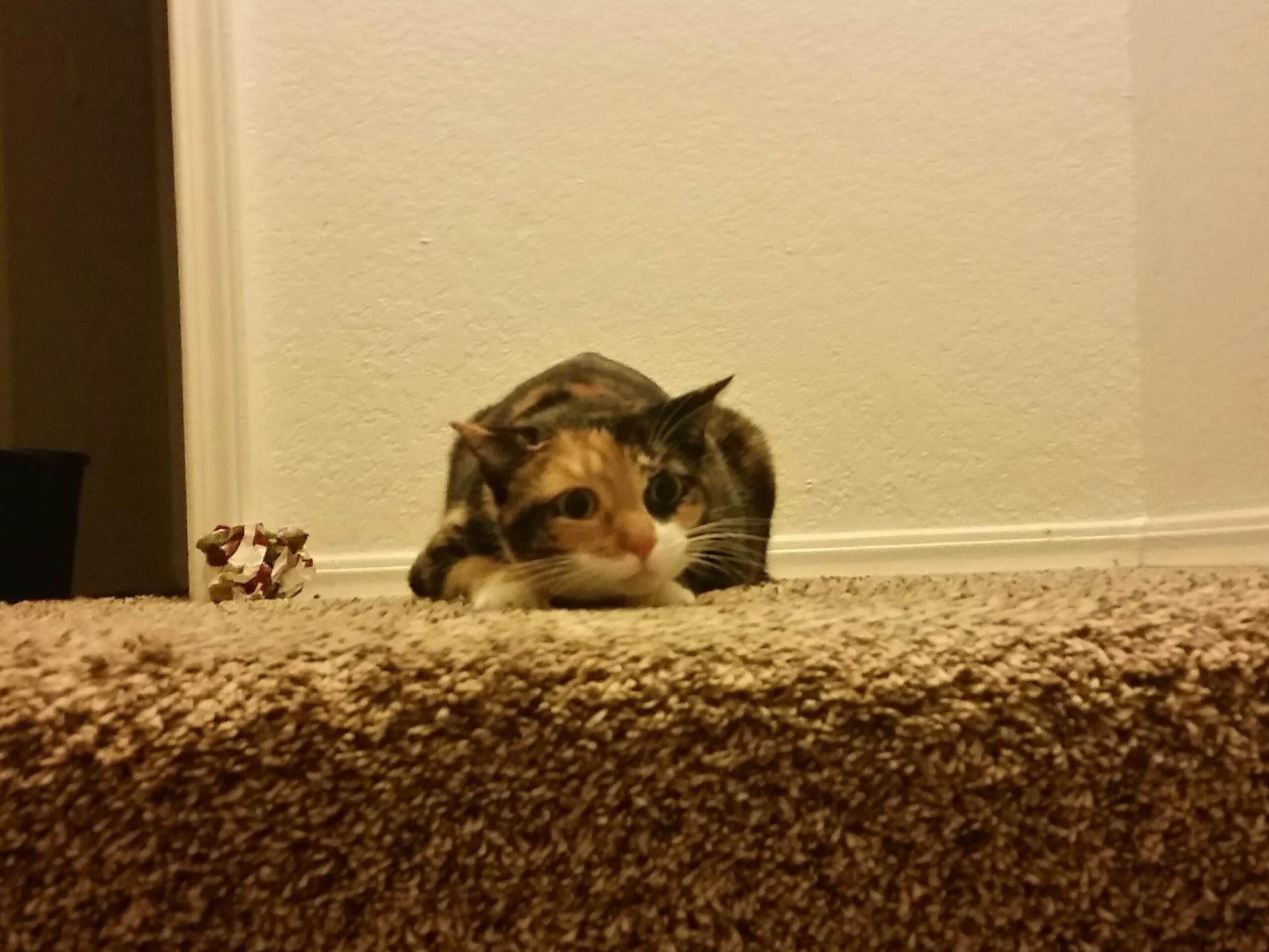 Someone S A Little Sleepy Kitten Cute Cat Sleepy Kitten Sleepy Cat Cat Nap