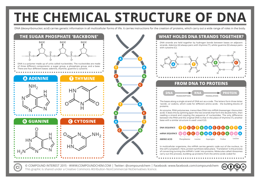 Chemical structure of dna science pinterest chemical structure chemical structure of dna ccuart Gallery