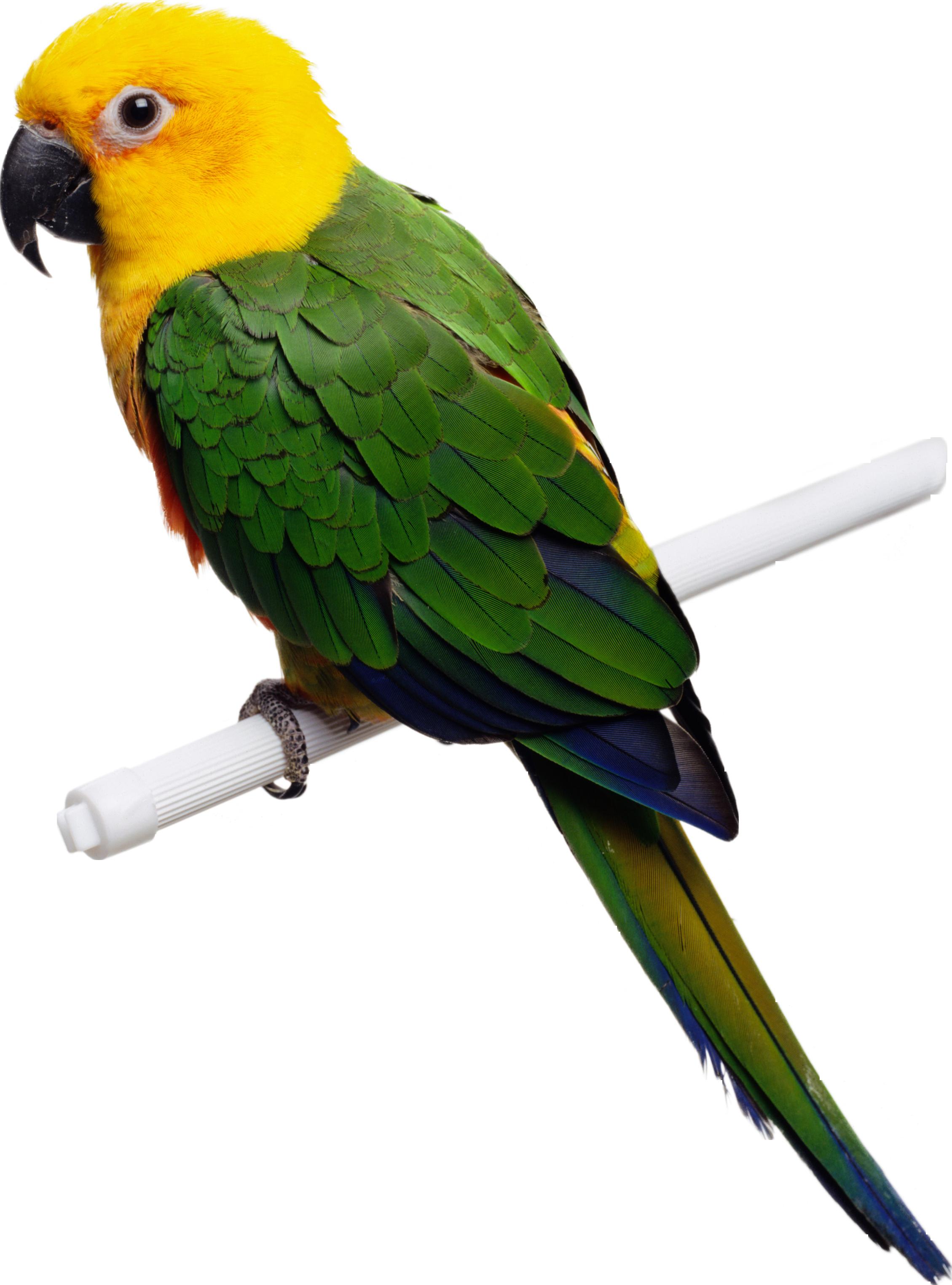 Картинках текст, картинка попугай для детей