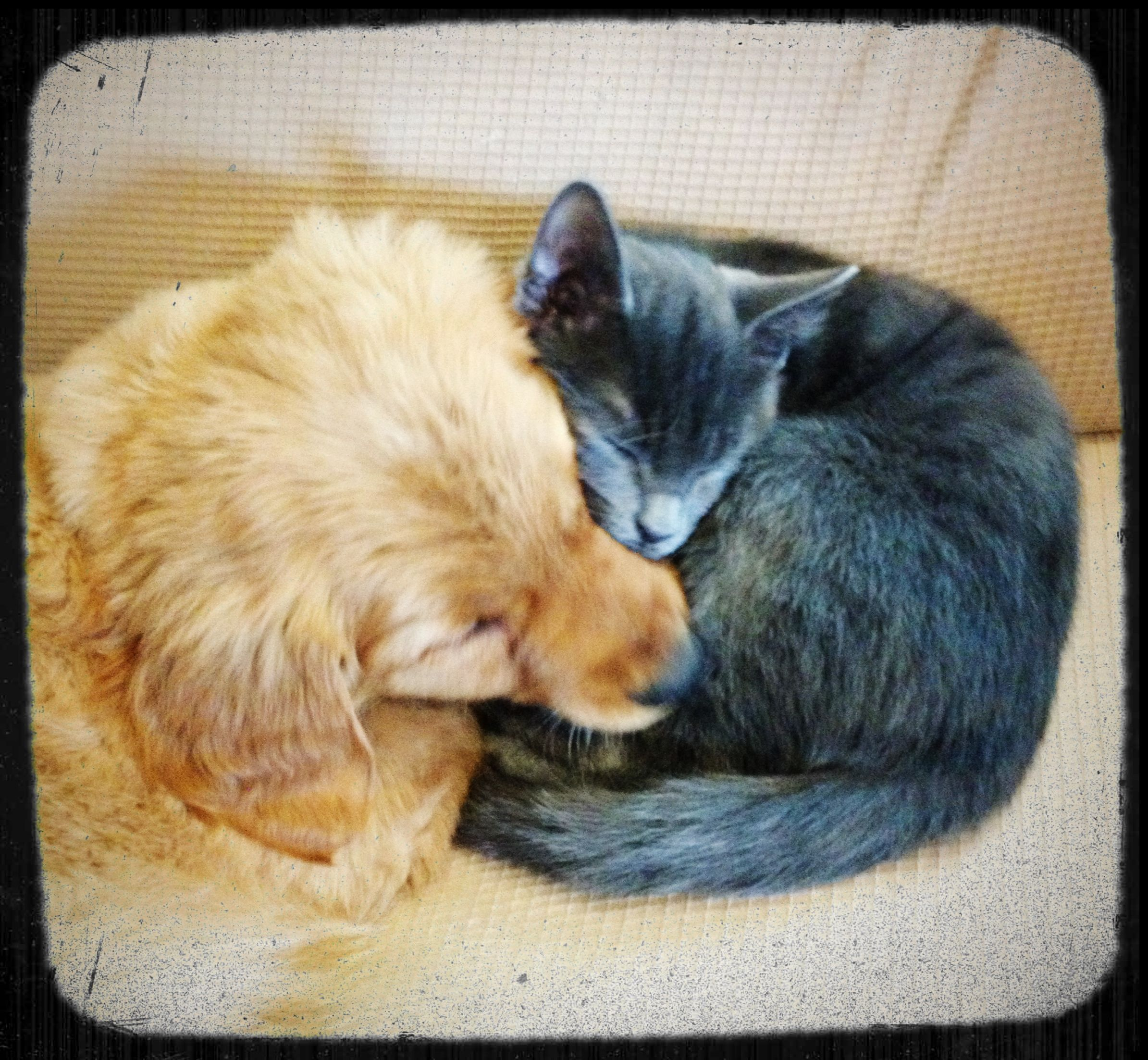Puppies And Kittens Can Snuggle Dog Cat Cute Animals Cats And Kittens