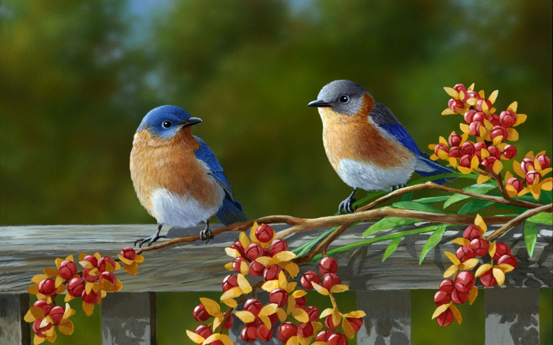Download Beautiful Birds Wallpaper 1920x1200 Full Hd Wallpapers