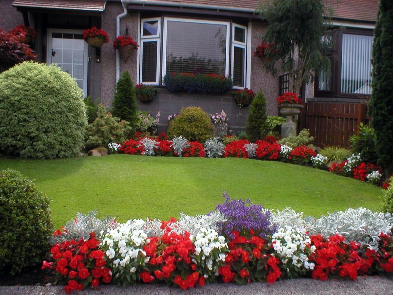Red Flamboyant Begonia In Our Front Garden Large Backyard Landscaping Garden Landscape Design Front Garden Design