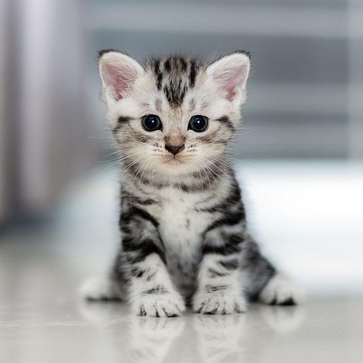 Katzen Baby Baby katzen, Katzen, Babytiere