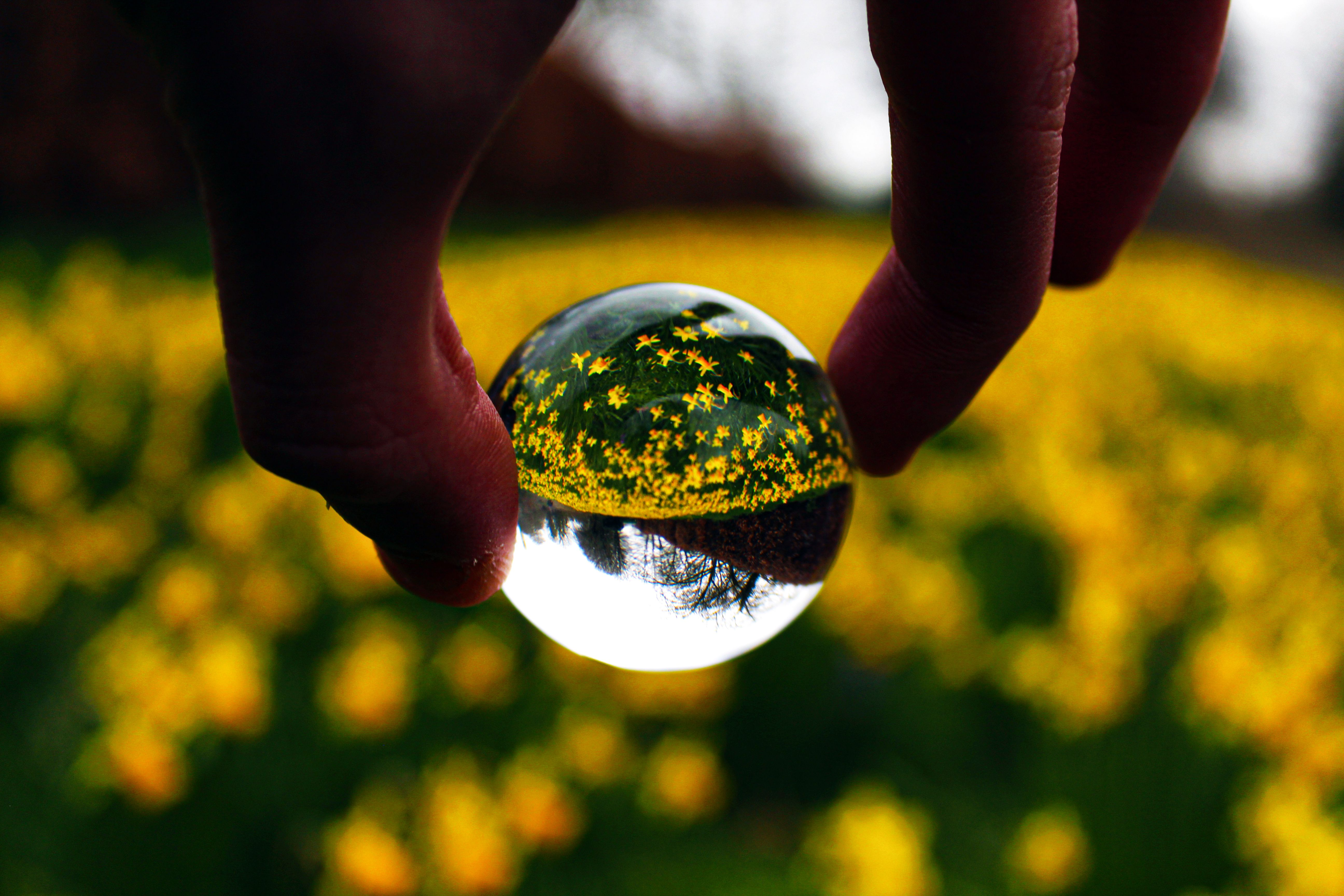 Had so much fun shooting through one of these. I recommend photographers buying this if you want to try new things  #photography #naturephotography #nature #flowers #crystalball #trynewthings #contrast