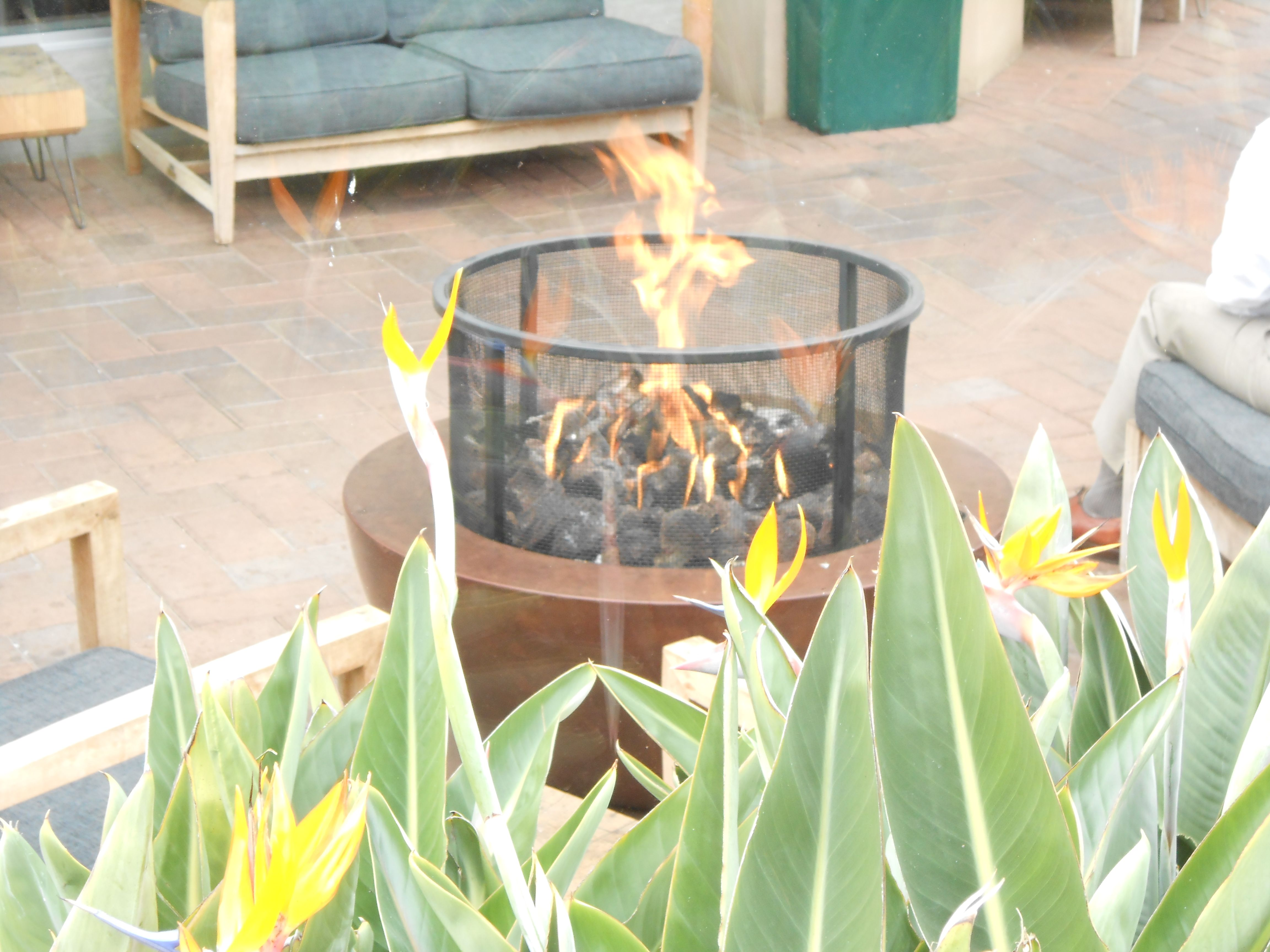 fire pit and birds of paradise flowers share space at the fashion