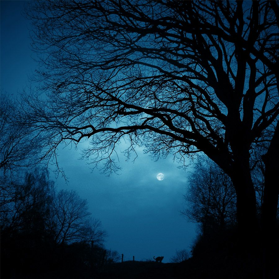 beautiful night photography - Bing Images | Nights Allure ... - photo#7