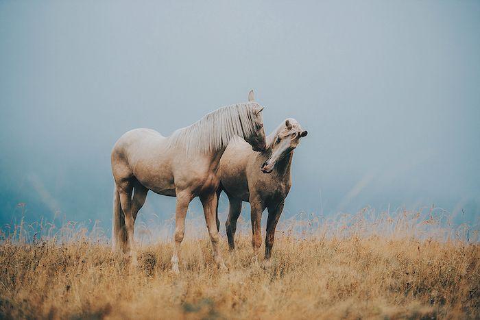 pferdebilder