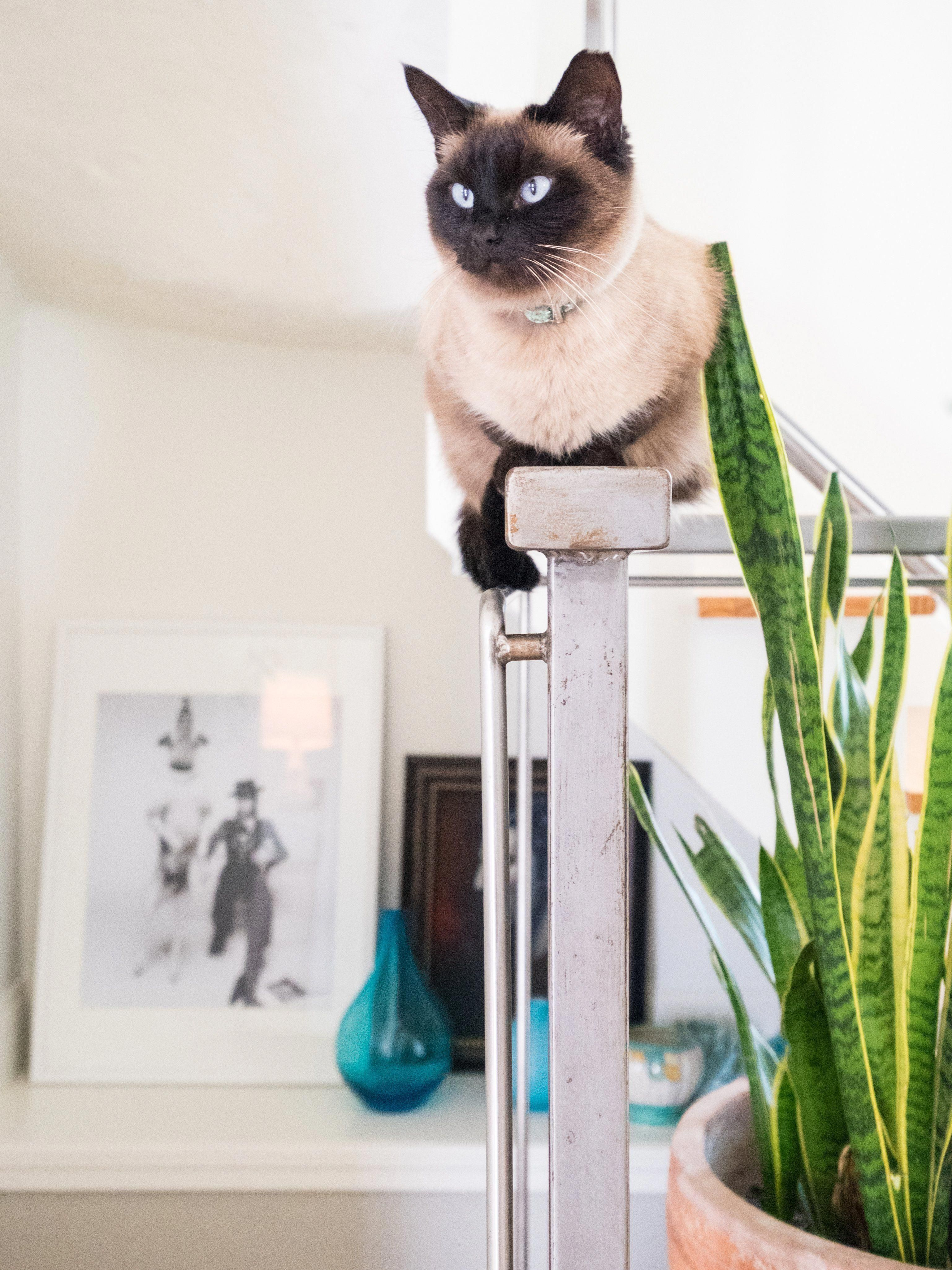 Cat Perch Allaboutcats Low Maintenance Pets I Love Cats Cute Adorable