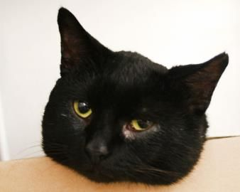 This handsome black fella is JayJay, a two-year-old cat! You