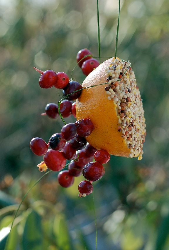 Great all-natural Bird Feeder (secure grape kabobs to half an orange & cover in seeds)