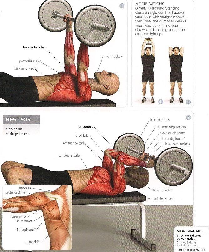 Qué Músculos Trabajo En Cada Ejercicio Mundo Entrenamiento Ejercicios Para Antebrazo Ejercicios De Entrenamiento Ejercicios