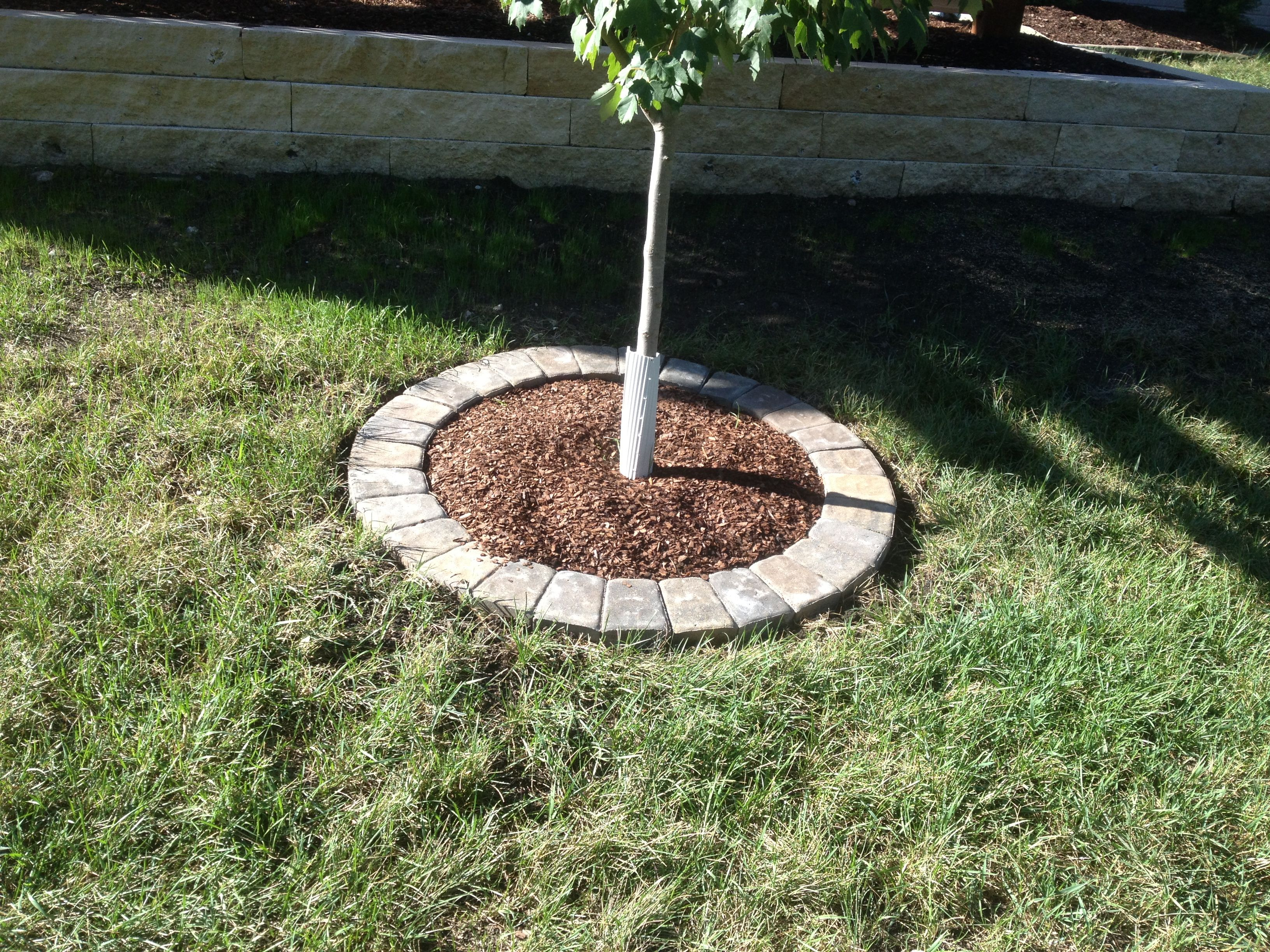 A simple tree ring with circle pavers