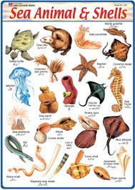 Resultado de imagen de list of sea animals