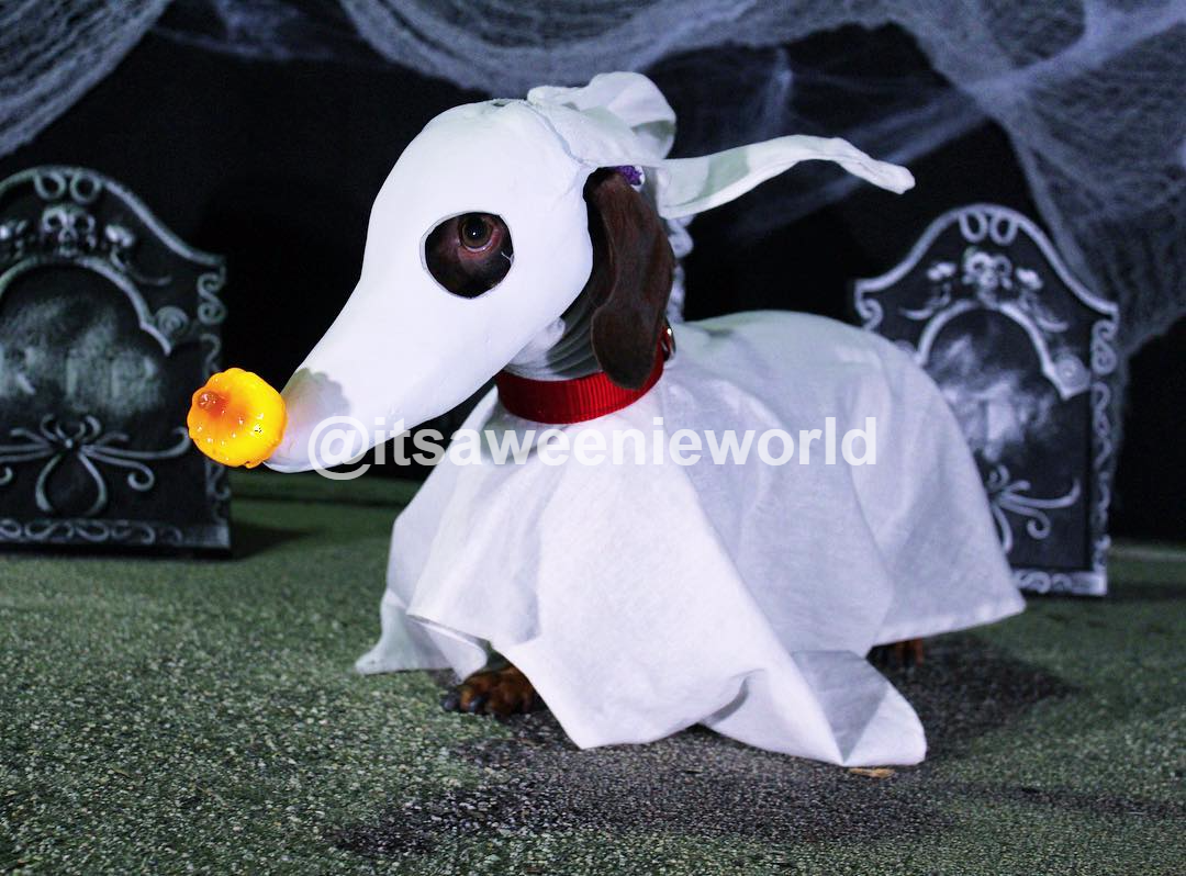 Zero Costume for dog! #zero #nightmarebeforechristmas #dog ...