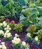 Weaving Annuals Into the Garden