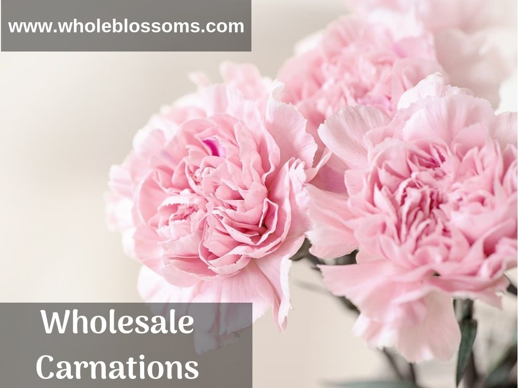 Carnation Flower Is A Great Choice For Your Weddings Events And Other Momentous Occasions They Add The Perf Flower Meanings Flower Guide Birth Month Flowers