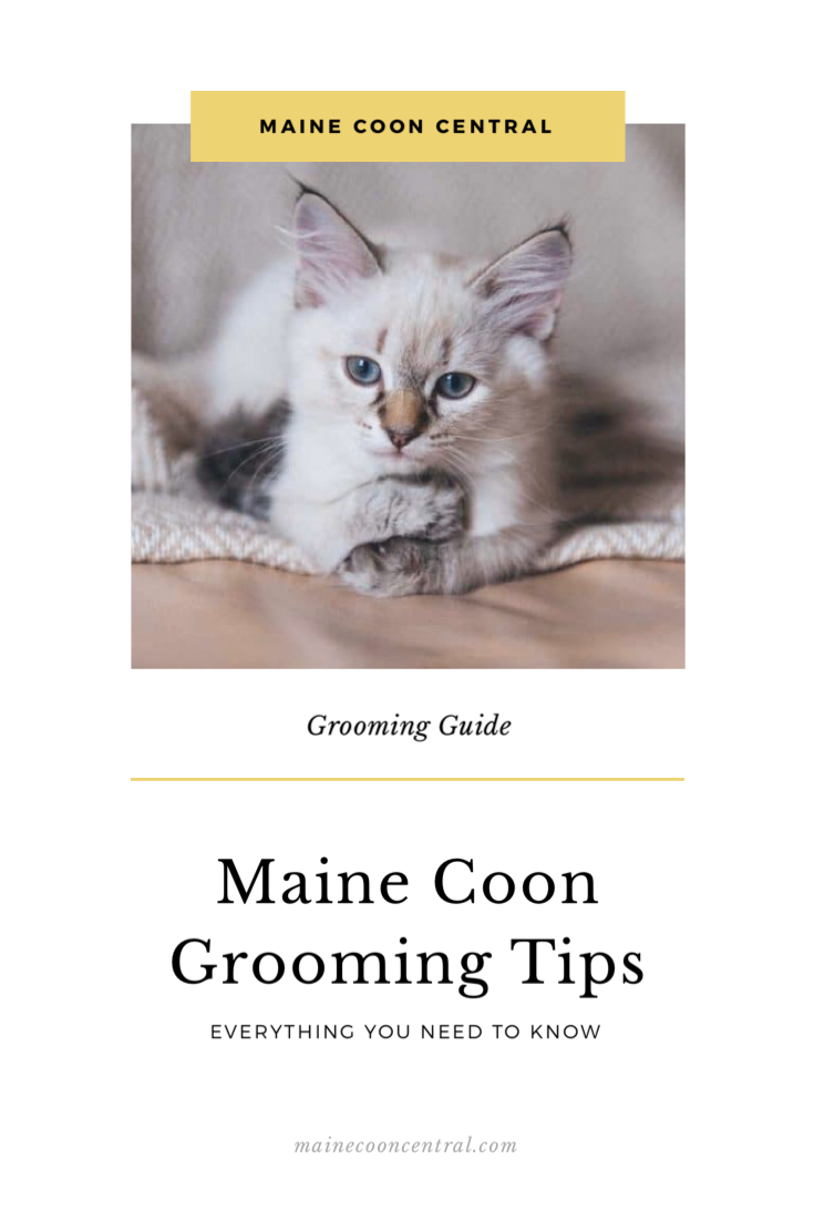 Pin on Maine Coon Grooming