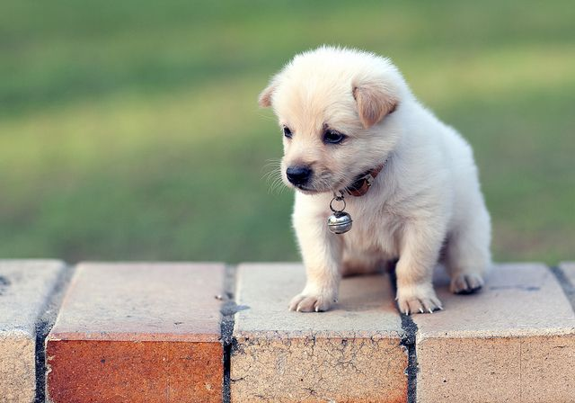 My Chupachara Cute Dogs Images Puppy Dog Photos Cute Dogs