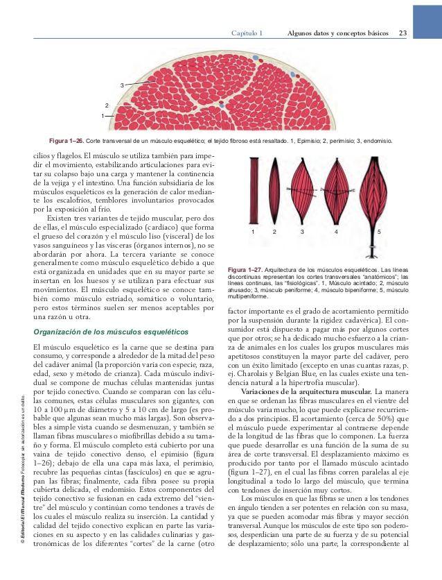 Anatomía veterinaria Dyce , K.M. ; Sack , W.O.; Wensing , C.J.G. ...