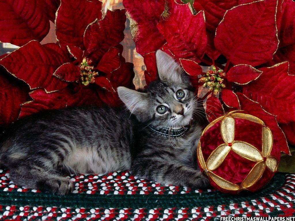 Kitty Xmas Ball Of Joy Christmas Kitten Christmas Cats Cat Wallpaper