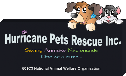 Hurricane Pets Rescue Inc With Images Animal Rescue National Animal Pets